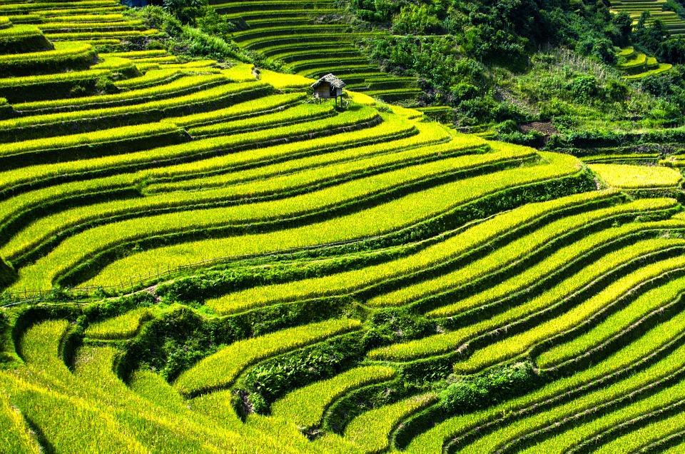 Découvrir le paysage vert de Mù Cang Chải en taxi-moto